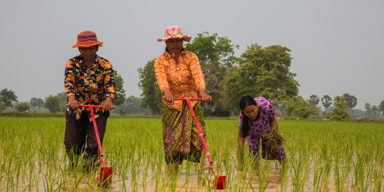Helping Farmers to Increase Yields and Knowledge