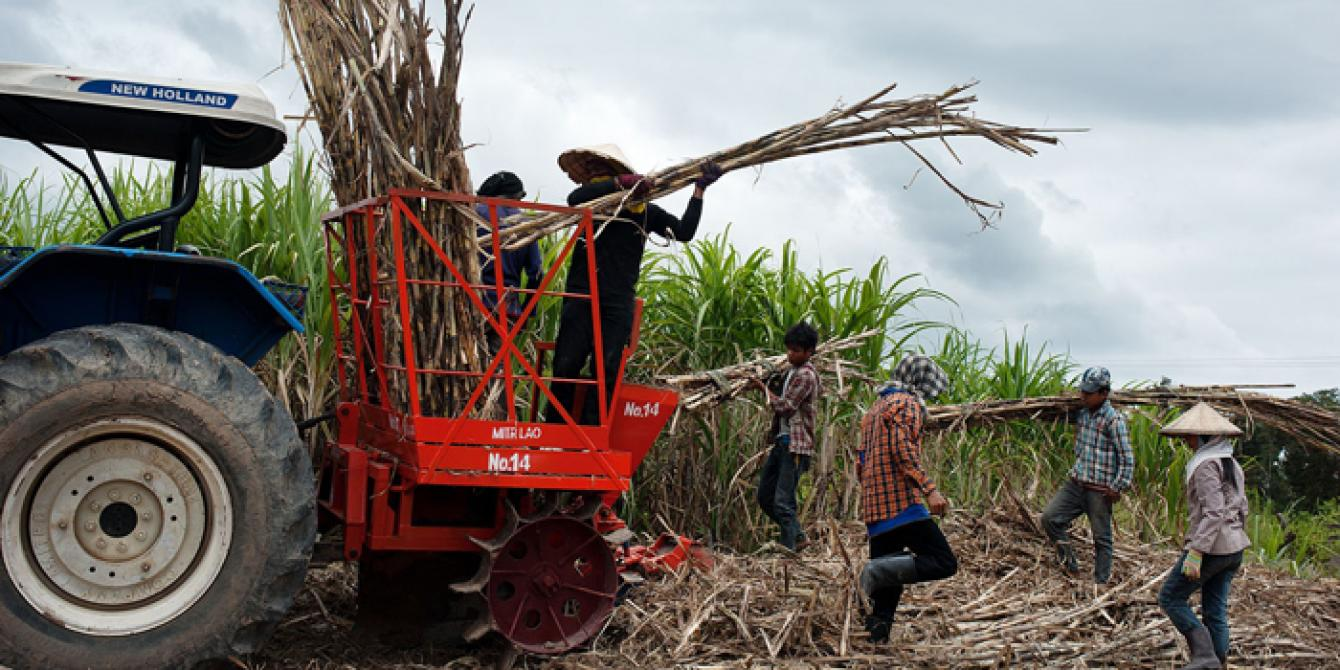 Marginalized workers in sugar farm