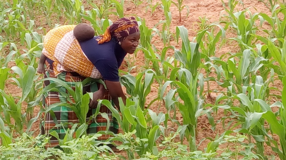 Theresa working at her maize garden (picture taken in August,2017)