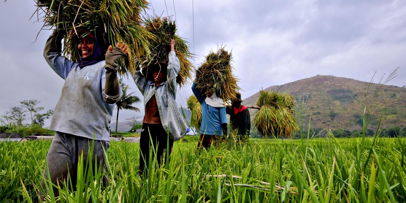 Women farmers carrying on their heads newly-harvested palay (Photo: Veejay Villafranca/Oxfam)