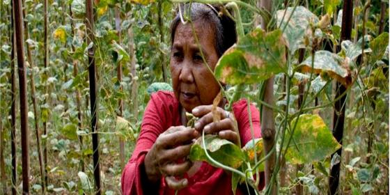 The cause of dualism within the agriculture sector becomes startlingly obvious - food retail is growing but food exporting countries and their agribusiness allies and not the domestic small producers like Nita Oigoan of Rizal are the ones primarily benefitting from it. (Original photo: Veejay Villafranca)