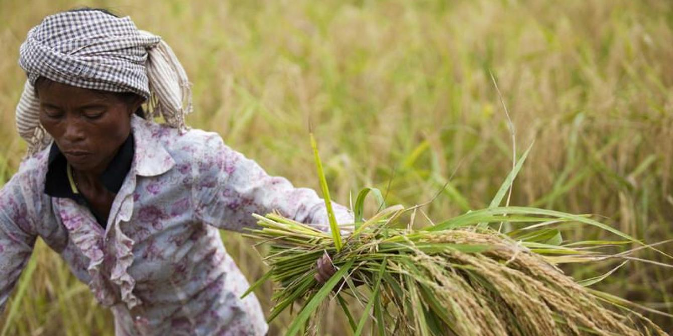 Sopheap Meas in her rice field, Cambodia 2012. Credit: Simon Rawles/Oxfam