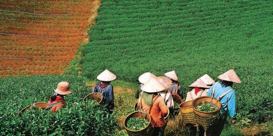 Ethnic minority farmers in Vietnam. Credit: Oxfam Vietnam